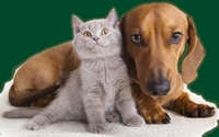 025-cat-and-dog_200x